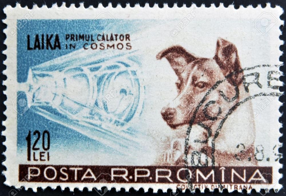 La perra Laika fue el primer ser vivo en viajar al espacio y fue enviada allí por la URSS