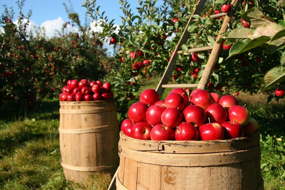 Sector agrícola